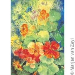Buy Postcards Large Format - Nasturtium 5 pk SAVE 40% D in AU Australia.