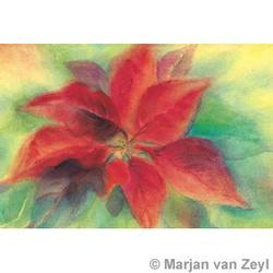 Buy Postcards- Christmas Flower SPECIAL ORDER 5 pk in AU Australia.