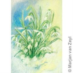 Buy Postcards- Snowdrops 5 pk in AU Australia.