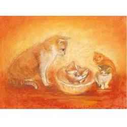 Buy Postcards- Cat and Kittens 5 pk SPECIAL ORDER in AU Australia.