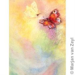 Buy Postcards- Butterfly World 5 pk in AU Australia.
