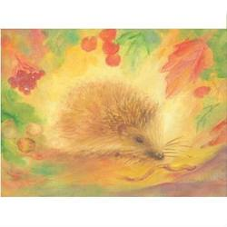 Buy Postcards- Hedgehog 5 pk in AU Australia.