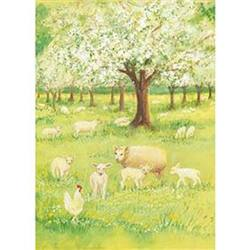 Buy Postcards- Lambs in the Orchard 5 pk SPECIAL ORDER in AU Australia.
